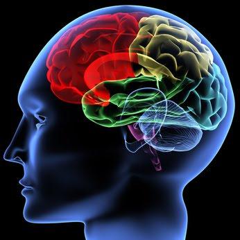 cerveau-surdoue
